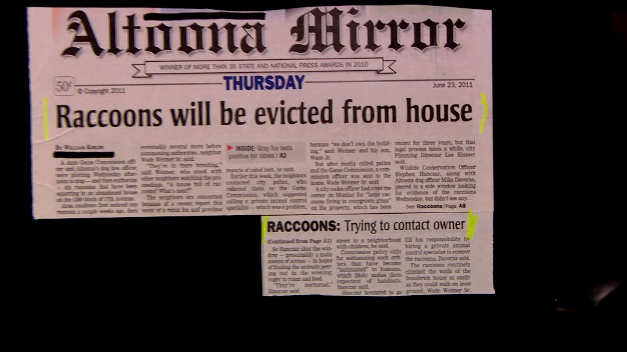 It's not abnormal to want to evict raccoons from a house.