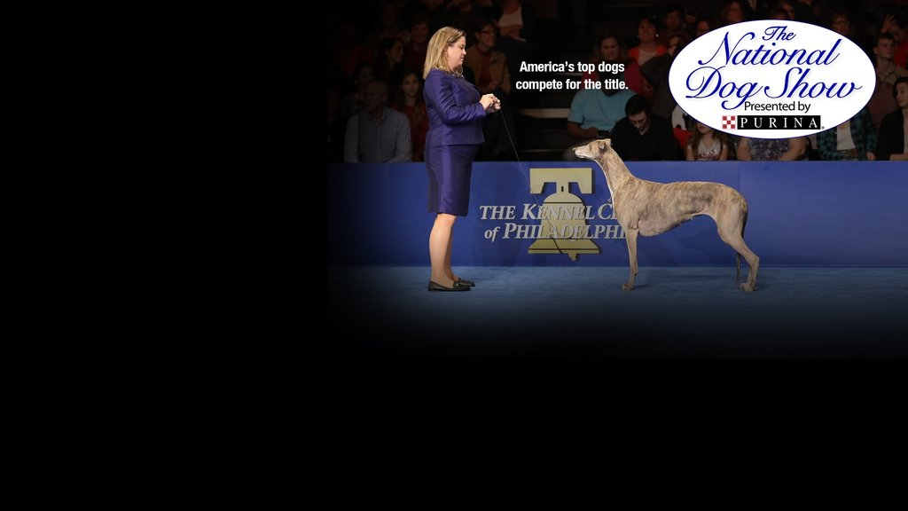 The National Dog Show Key Art