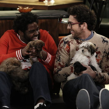 A Box of Puppies Walks into a Bar
