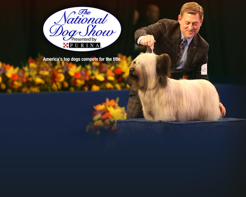 NBC Homepage - NEW SITE - Dynamic Lead Slide - The National Dog Show