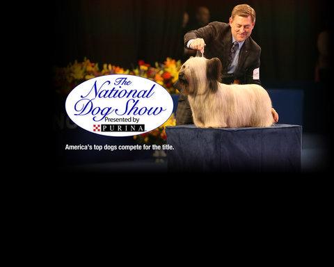 The National Dog Show Key Art