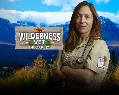 Wilderness Vet - Hero