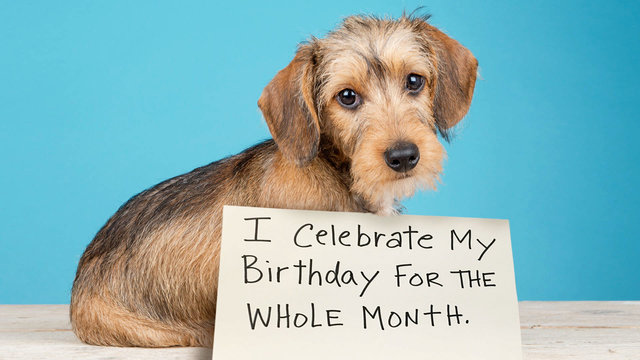Extreme Dog-Shaming: Birthday Month, Roomba Defiler