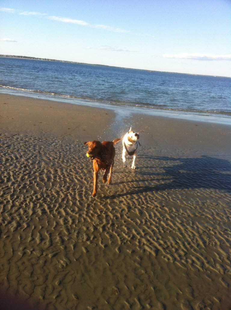 George and Roscoe Beach