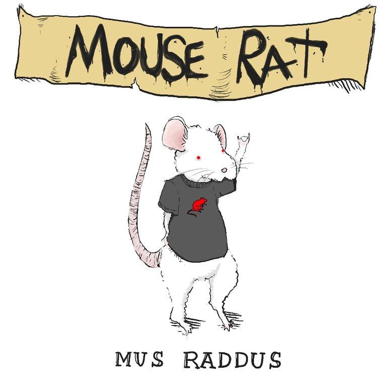 Mus Raddus