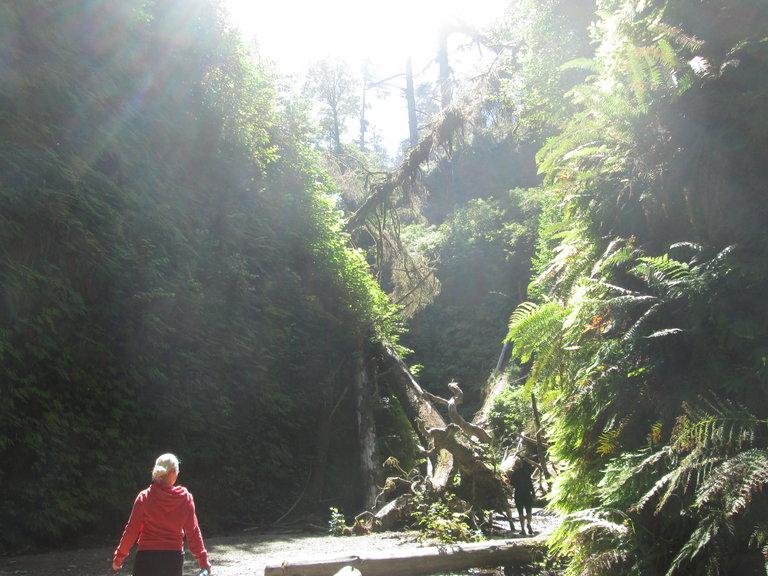 Natasha hiking Fern Canyon where Jurassic Park II was filmed