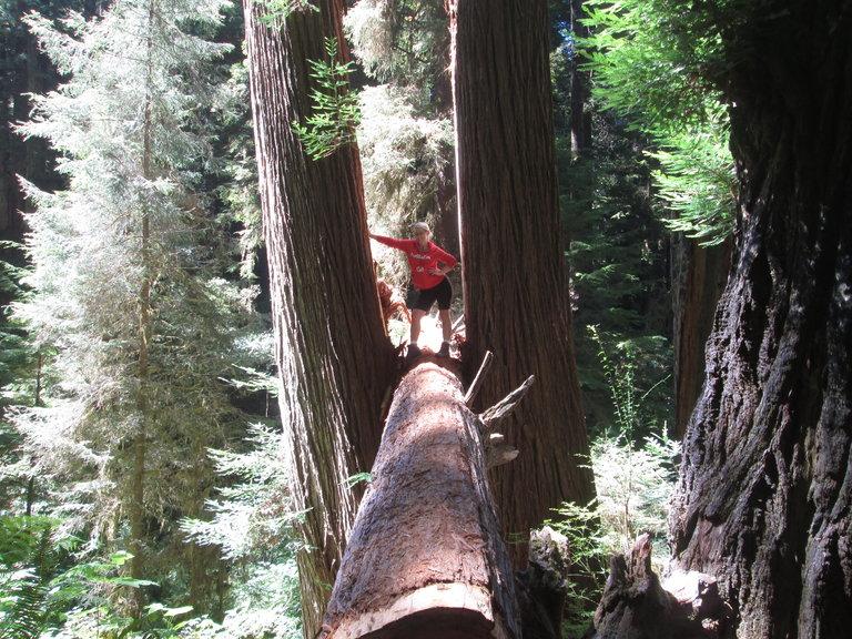 Natasha in the Redwoods