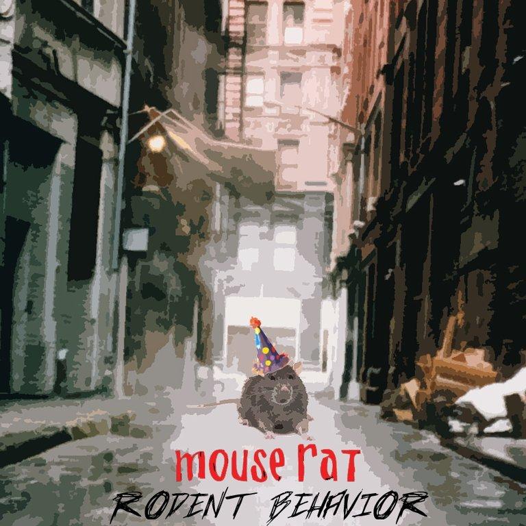 Rodent Behavior