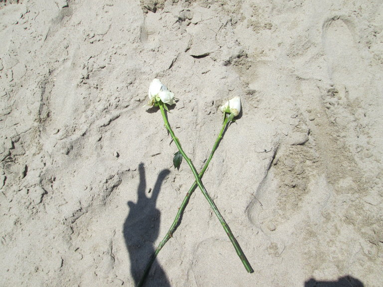 White roses in the sand