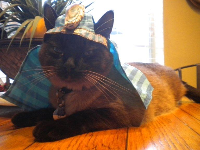 Cat as Pharaoh Dwight