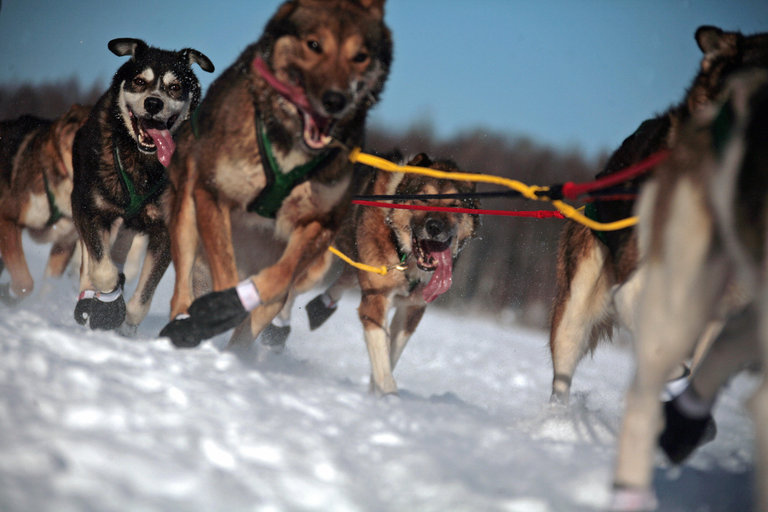 Ed Iten's sled dog team mushes over froz