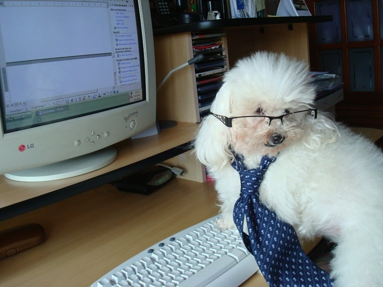Office Poodle