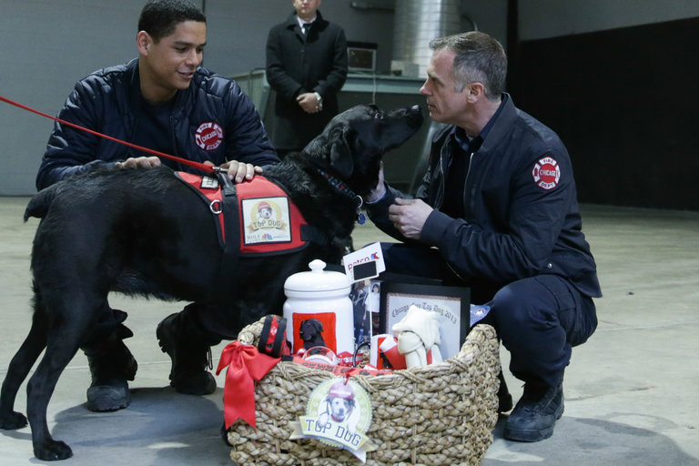 Chicago Fire's Top Dog