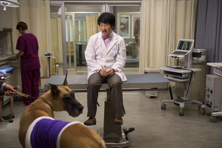 Animal Practice - Season 1