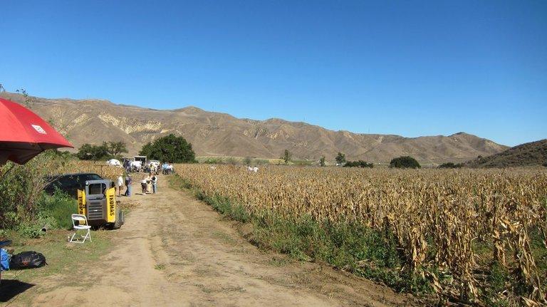 Cornfields in Piru, California.