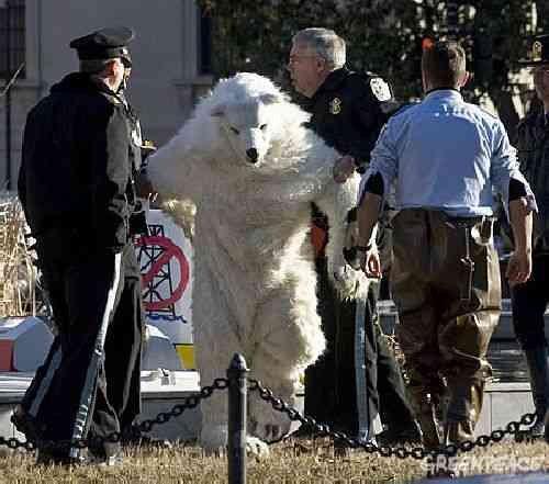 POLAR BEAR ARRESTED AT INTERIOR DEPARTMENT IN WASHINGTON
