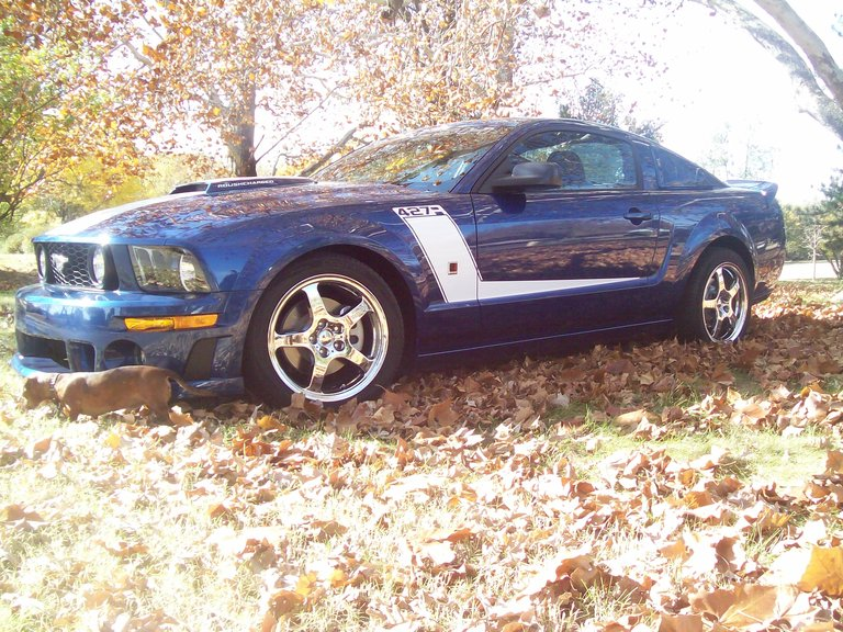 2007 - ford, jack roush mustang