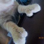 Thumbs, my cat!