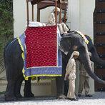 Honeymooning in India