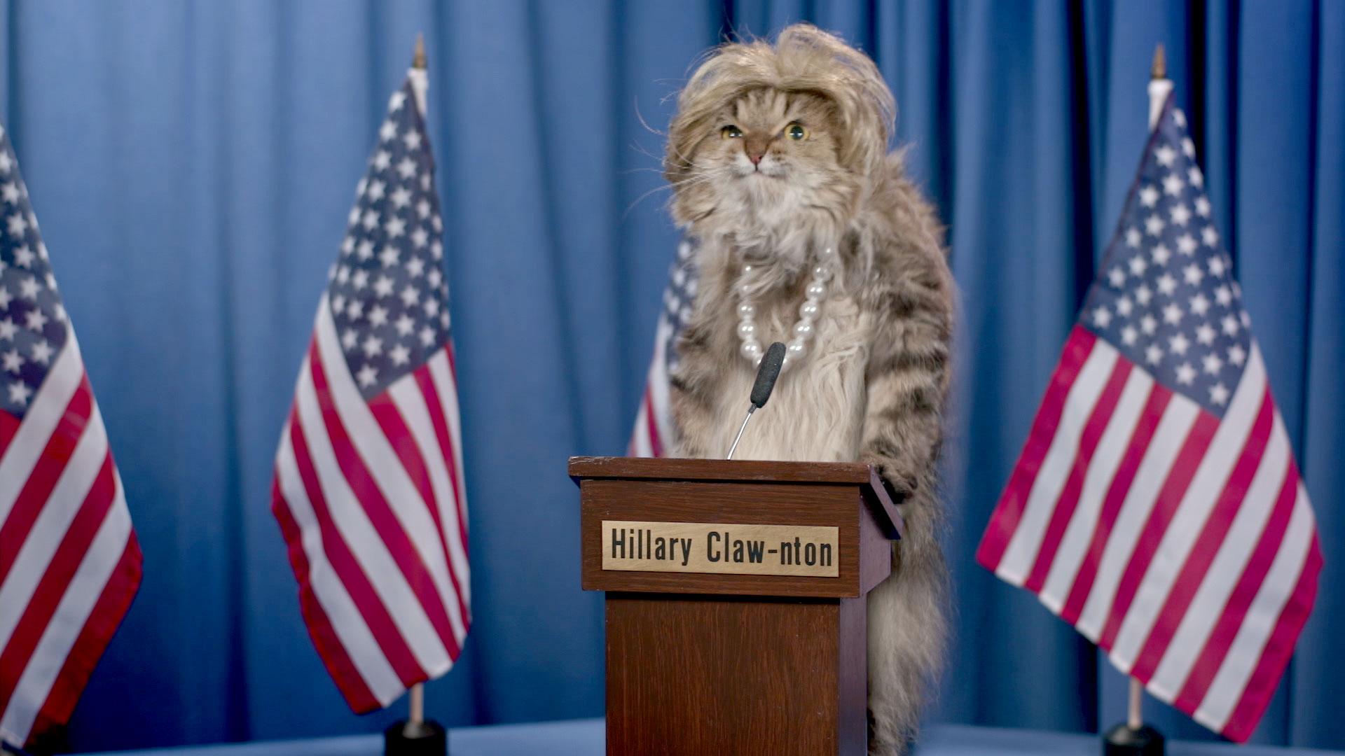 Audience Suggestion Box: Adam Sandler Minions, Cat Politicians - The ... Adam Sandler