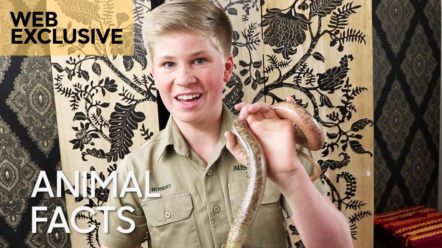 Animal Facts With Robert Irwin European Legless Lizard