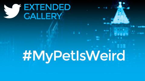 Hashtag Gallery: #MyPetIsWeird