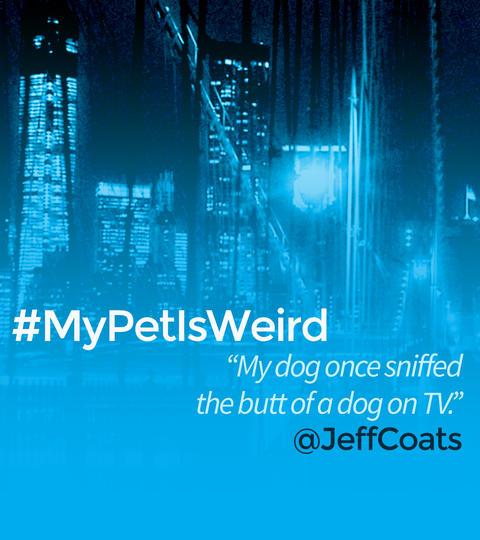 Hashtags: #MyPetIsWeird