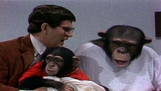 tim kazurinsky i married a monkey